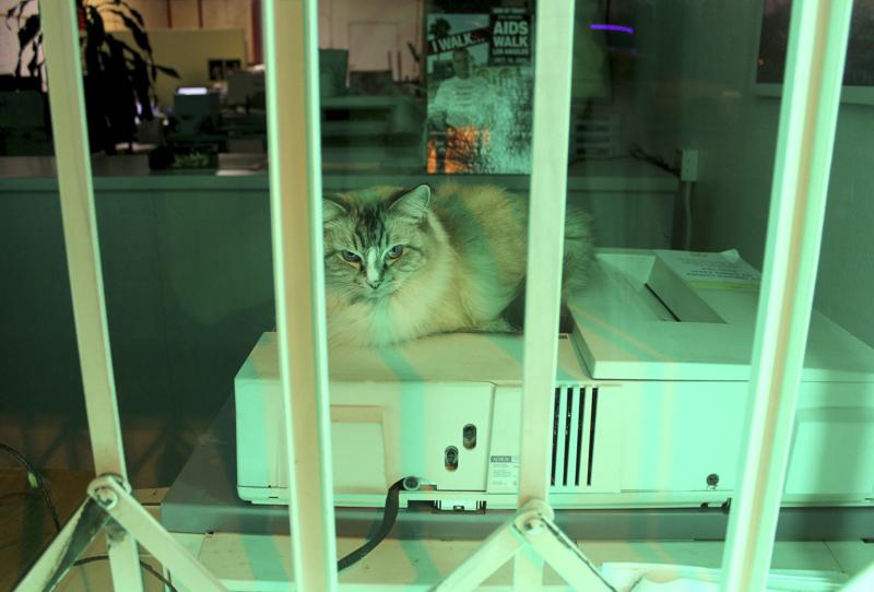 CAT IMG_8974_1.JPG