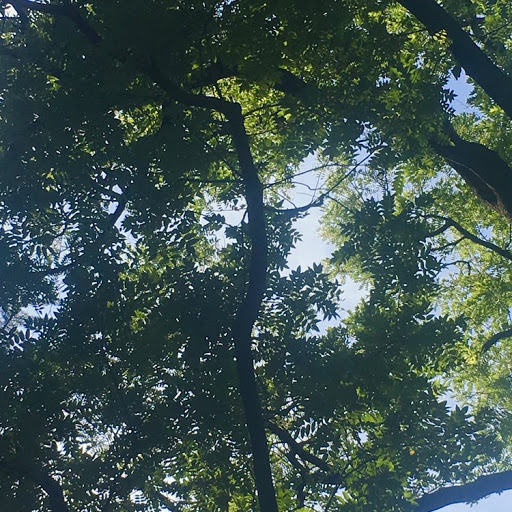 Image: a view of a blue sky through tree branches and leaves.