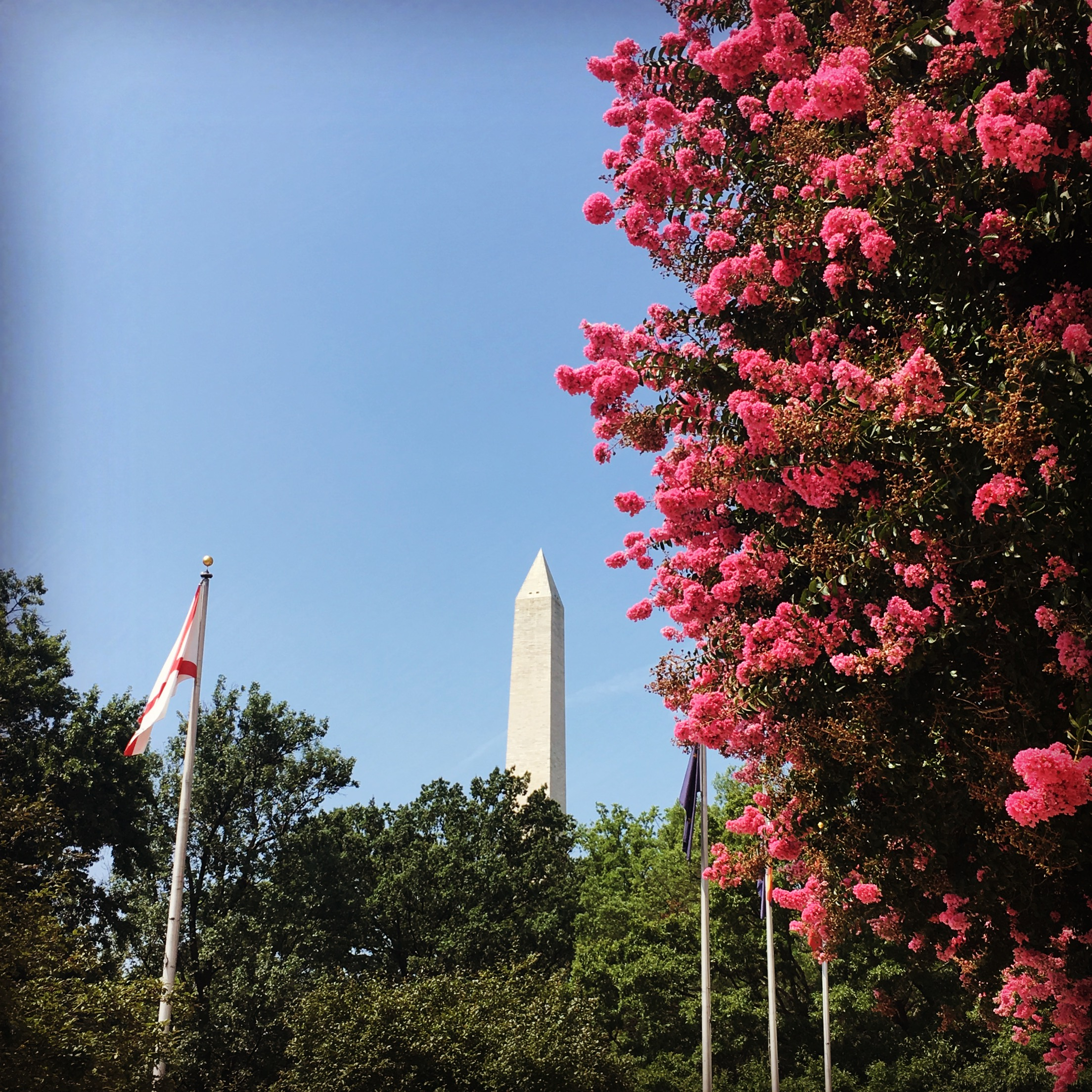 Image: A view of the Washington Monument with foliage and flowering trees. Image copyright Elisabeth Caron