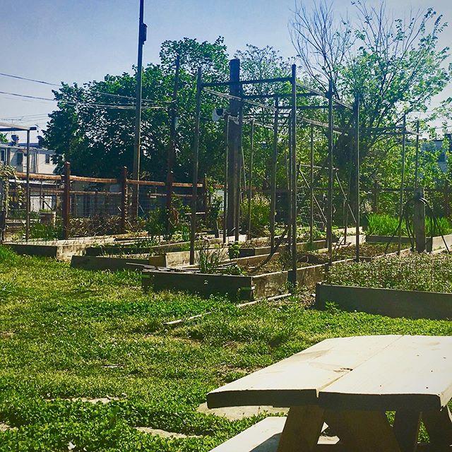🌱 • #playbasedkids #washingtondc #dc #communitygarden #garden #ecofriendly #ecoconcious #localgrown #eatlocal #eatlocalgrown #nannylife #nanny #ncs #ncslife #community