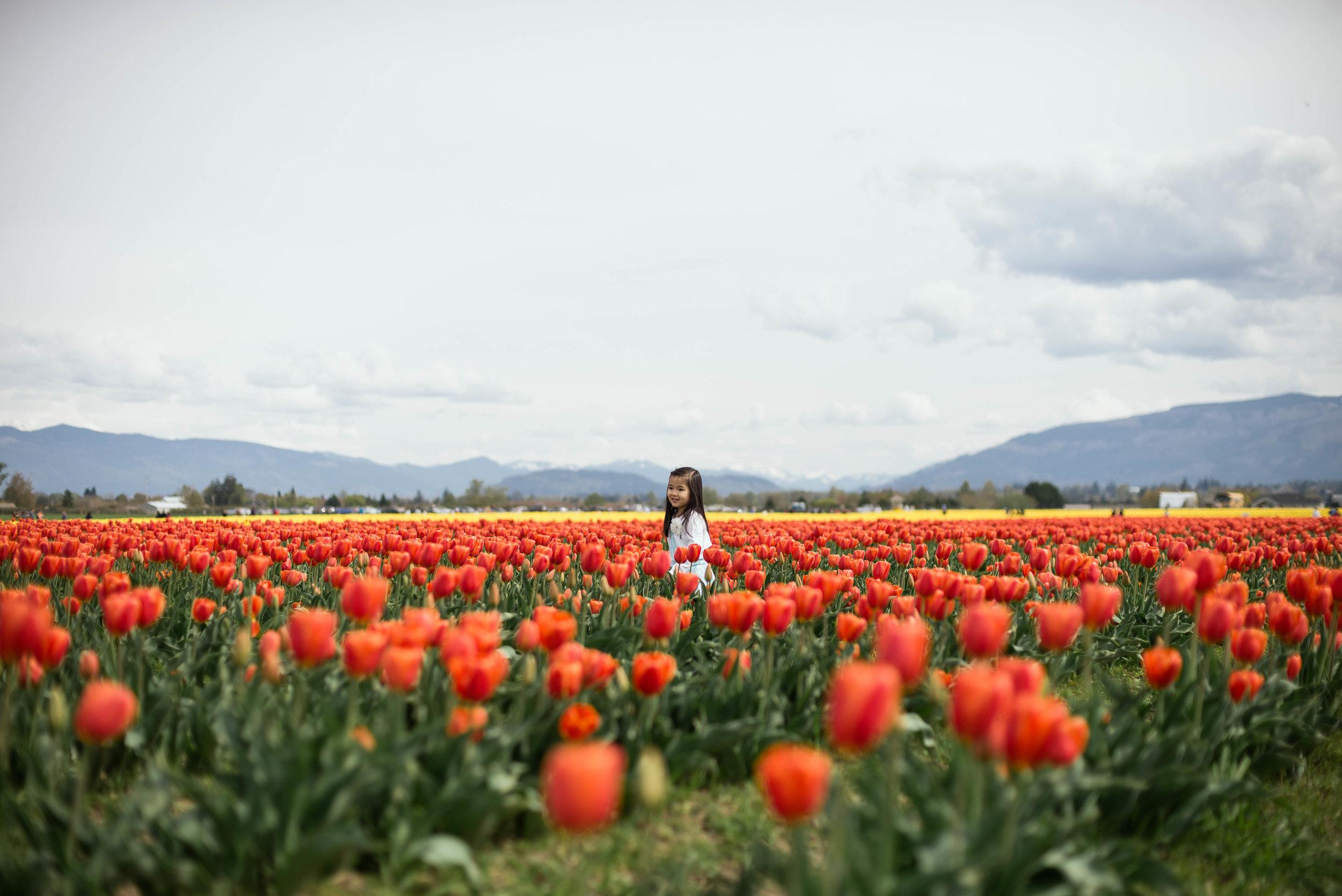 Tulips-6.jpg