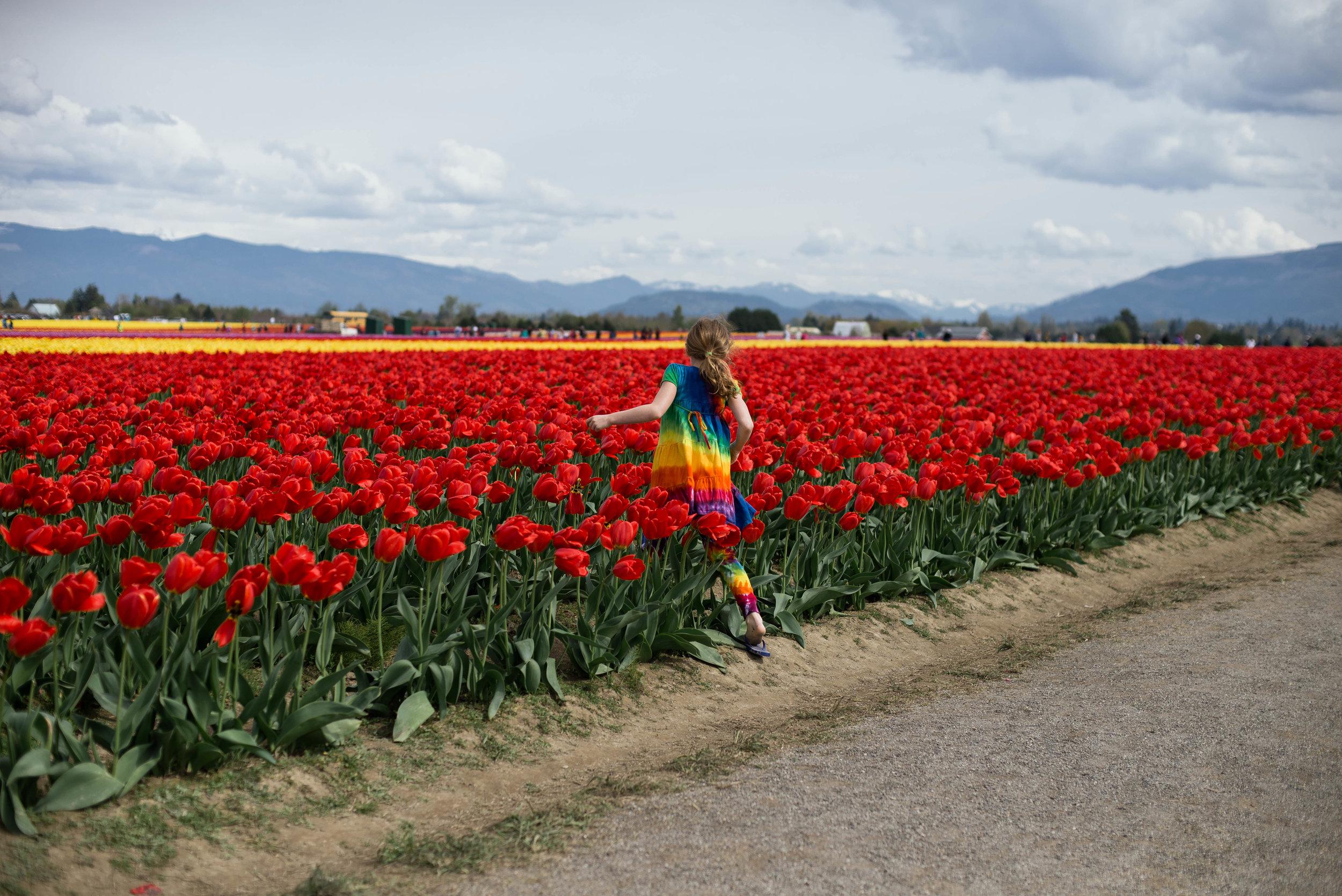 Tulips-19.jpg