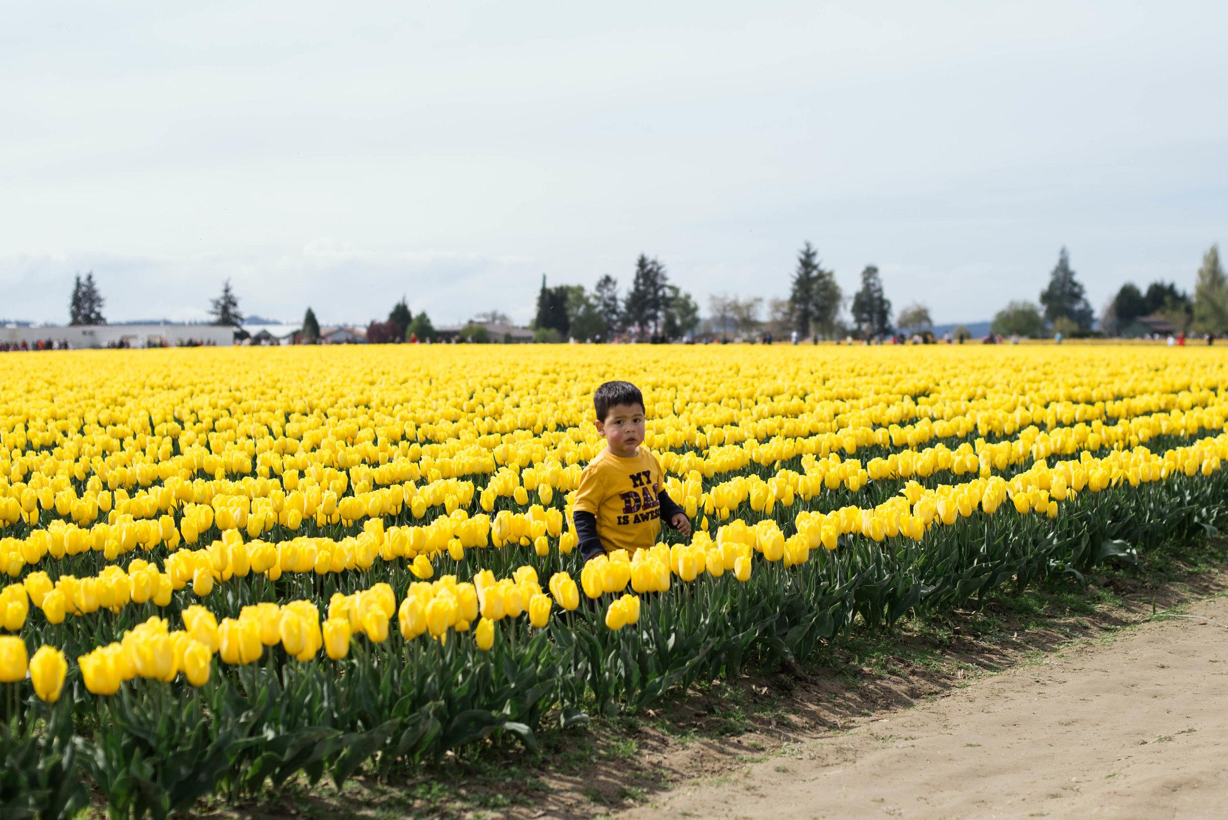 Tulips-37.jpg
