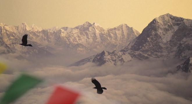 Sherpa - 2014