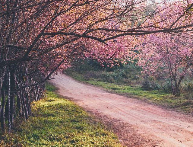 Una giornata di primavera come tante. Oggi, domani e ancora domani