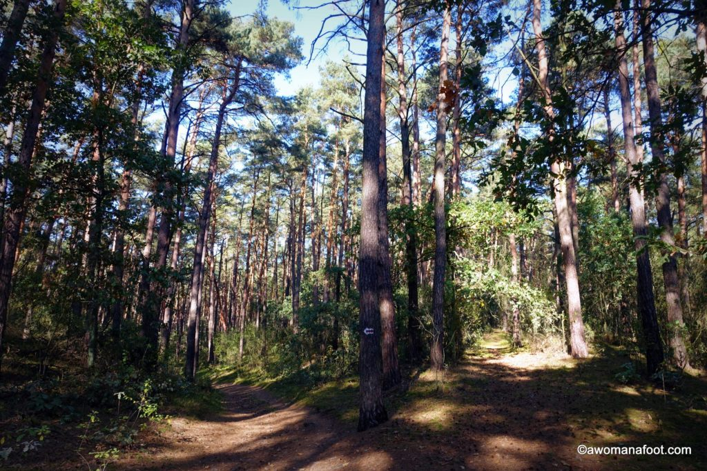 Hiking with anxiety - this time, in the #Kampinos National Park, #Warsaw, #Poland. Stunning fall foliage with the side of anxious thoughts. #hiking #solohiker #femalesolo #mentalhealth #anxiety #Warsaw What to do in Warsaw | National Parks in Poland | Hiking in Poland | awomanafoot.com