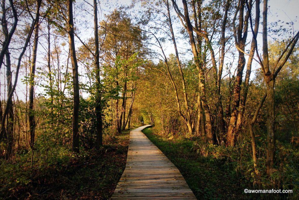 الحديقة الوطنية وغابة كامبينوس