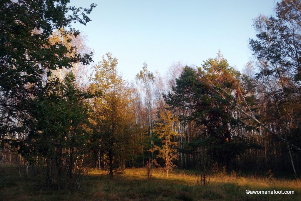 Hiking with anxiety - this time, in the #Kampinos National Park, #Warsaw, #Poland. Stunning fall foliage with the side of anxious thoughts and musings on mental health in the Great Outdoors. #hiking #solohiker #femalesolo #mentalhealth #anxiety #Warsaw What to do in Warsaw | National Parks in Poland | Hiking in Poland | awomanafoot.com | Mental wellness | Calming anxiety with hiking | How Nature calms anxiety | Social phobias |
