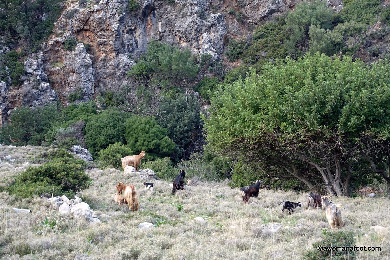 goats on Crete kri kri Greece animals solo hiking