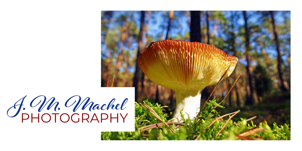 Machel Photography (4).png
