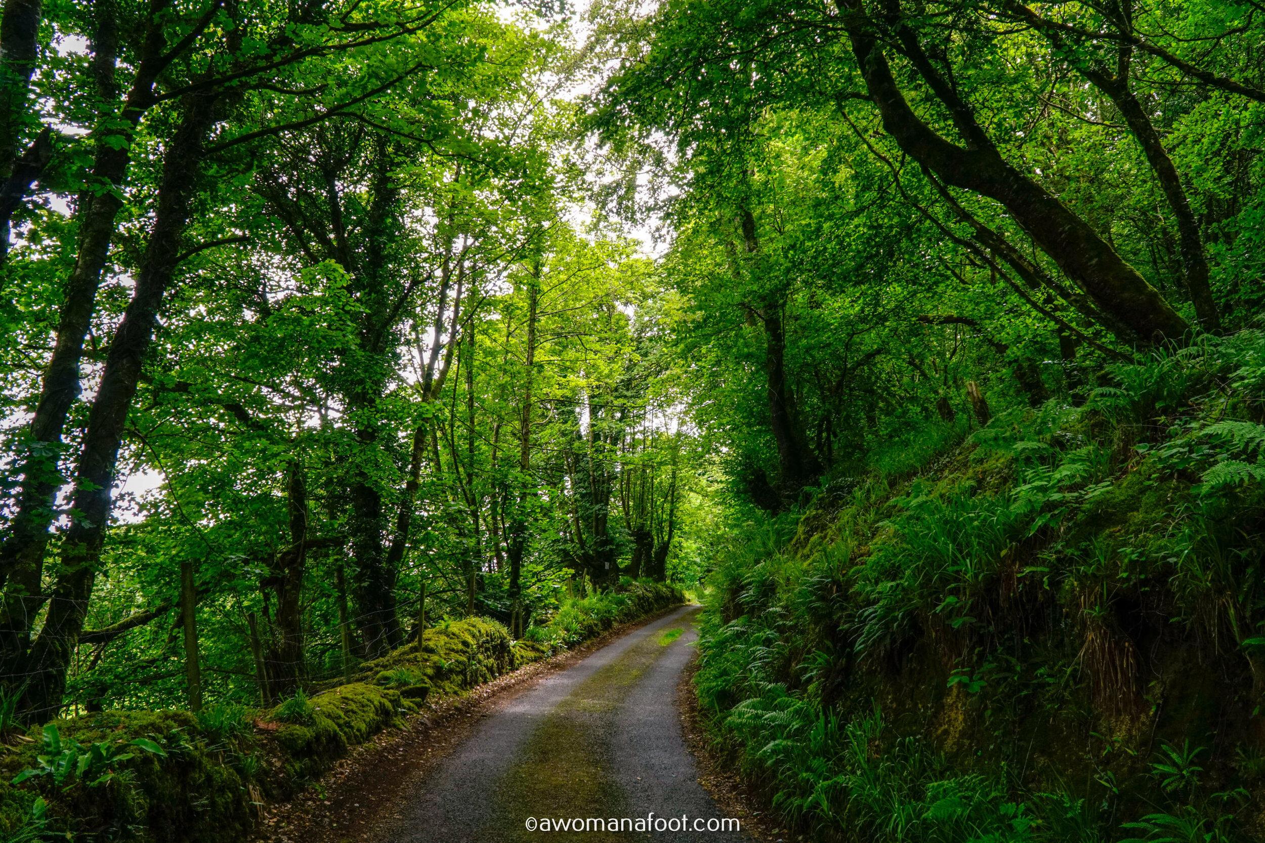 Hiking Solo Sli Gaeltacht Mhuscrai Mallow Ballyvourney40.jpg