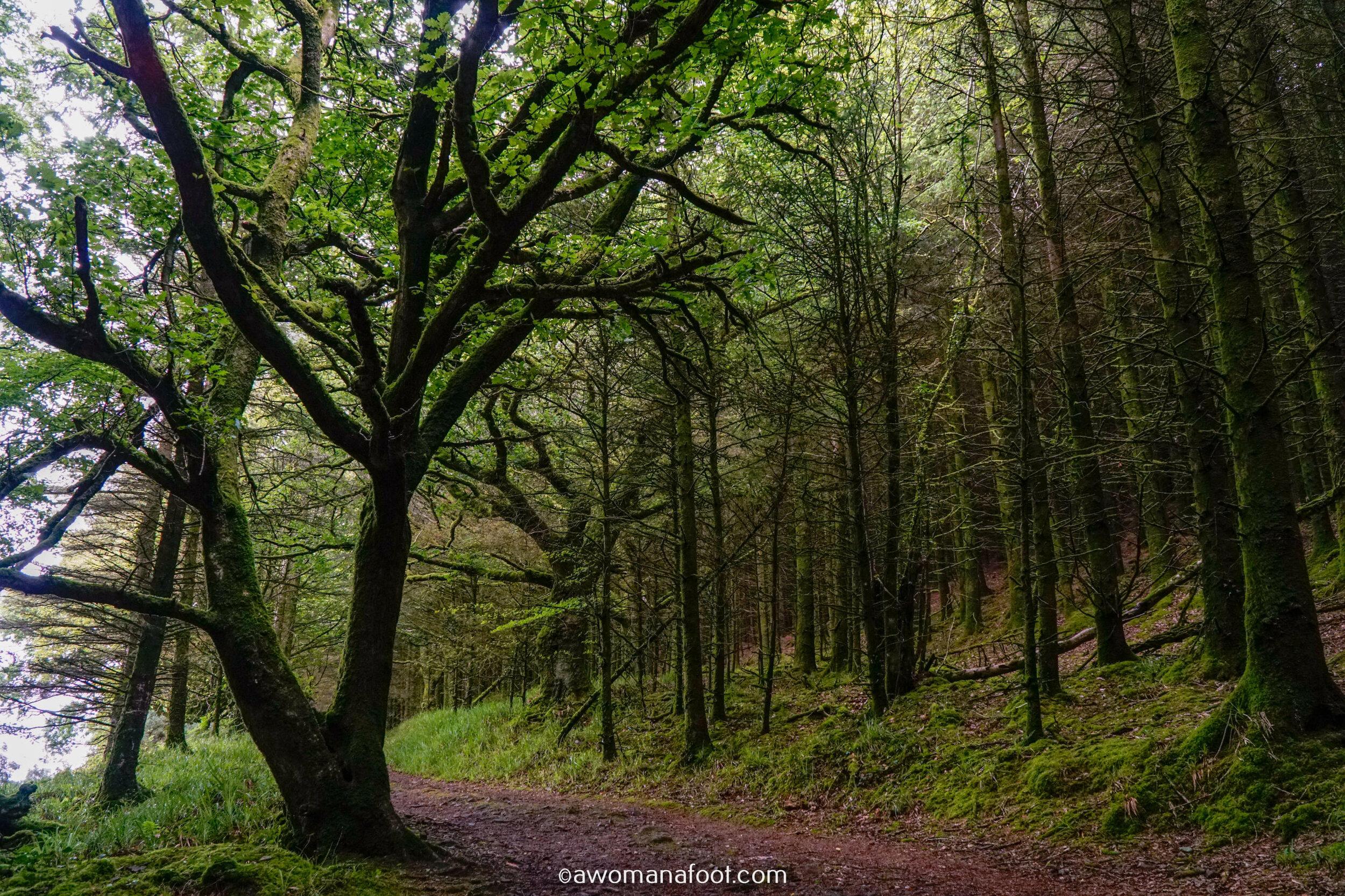 Hiking Solo Sli Gaeltacht Mhuscrai Mallow Ballyvourney47.jpg