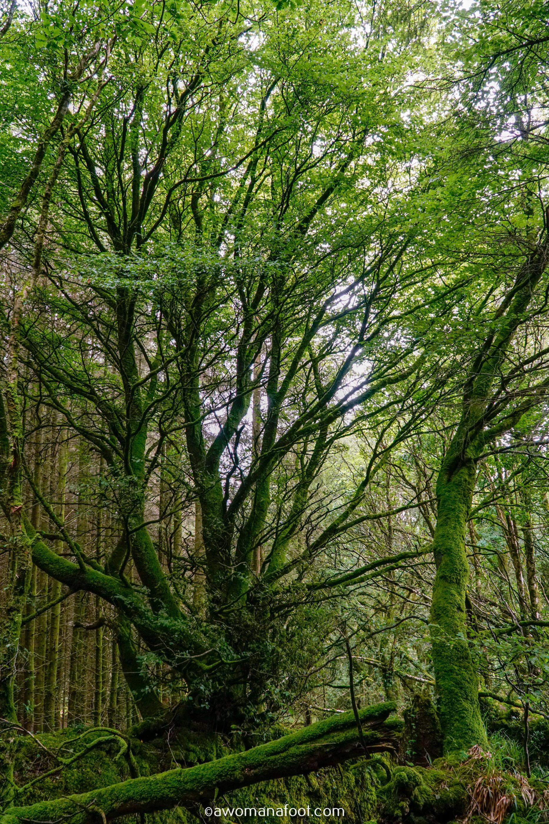 Hiking Solo Sli Gaeltacht Mhuscrai Mallow Ballyvourney49.jpg