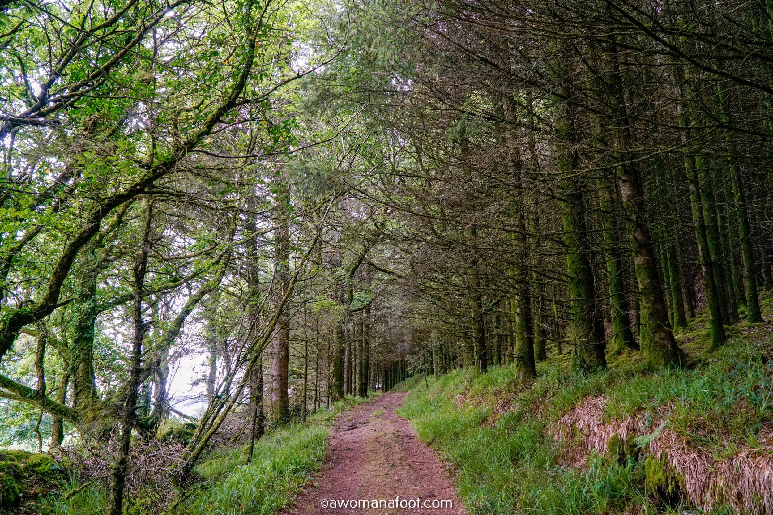 Hiking Solo Sli Gaeltacht Mhuscrai Mallow Ballyvourney50.jpg