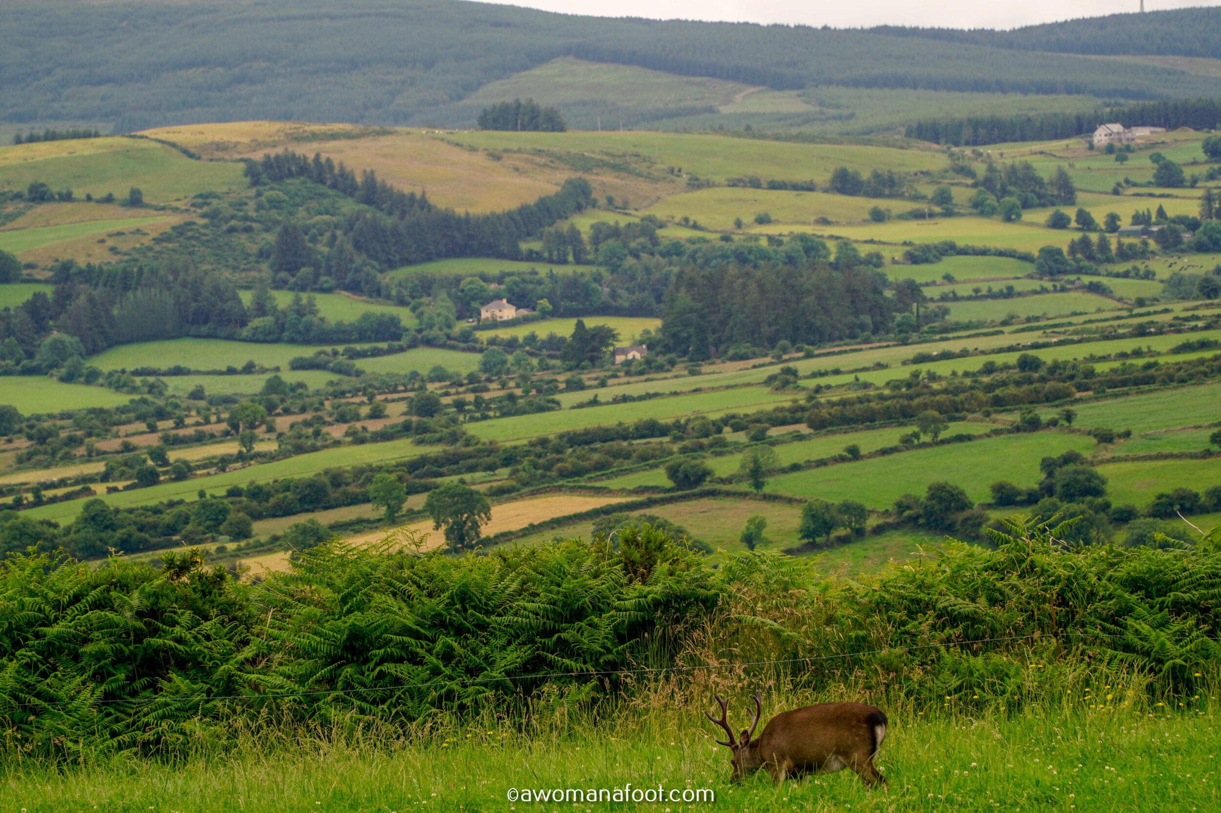 Hiking Solo Sli Gaeltacht Mhuscrai Mallow Ballyvourney69.jpg