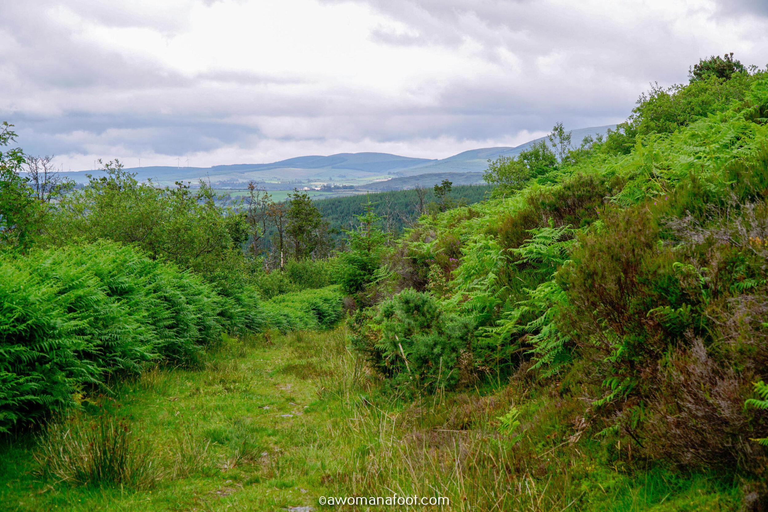 Hiking Solo Sli Gaeltacht Mhuscrai Mallow Ballyvourney94.jpg