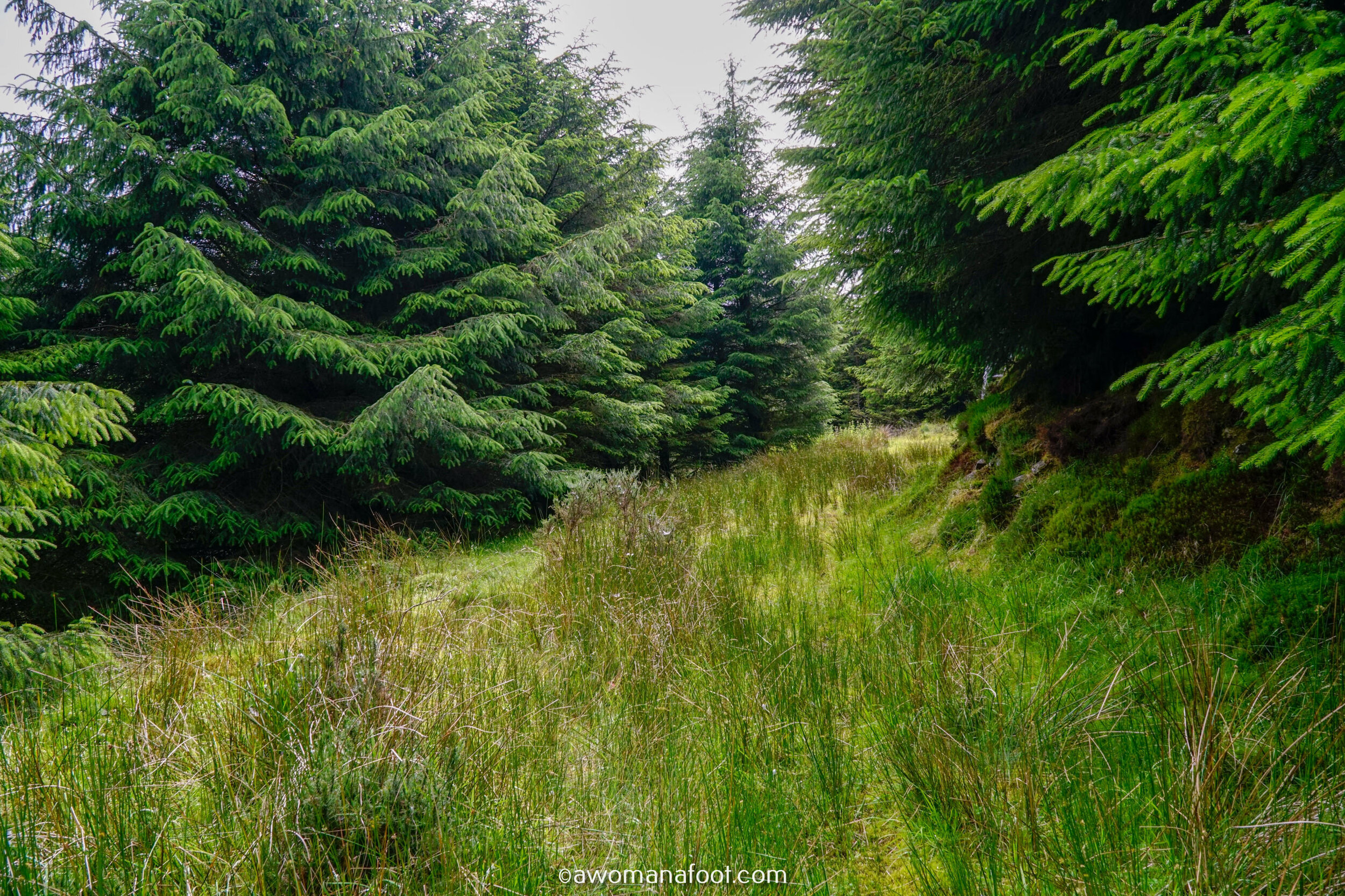 Hiking Solo Sli Gaeltacht Mhuscrai Mallow Ballyvourney179.jpg