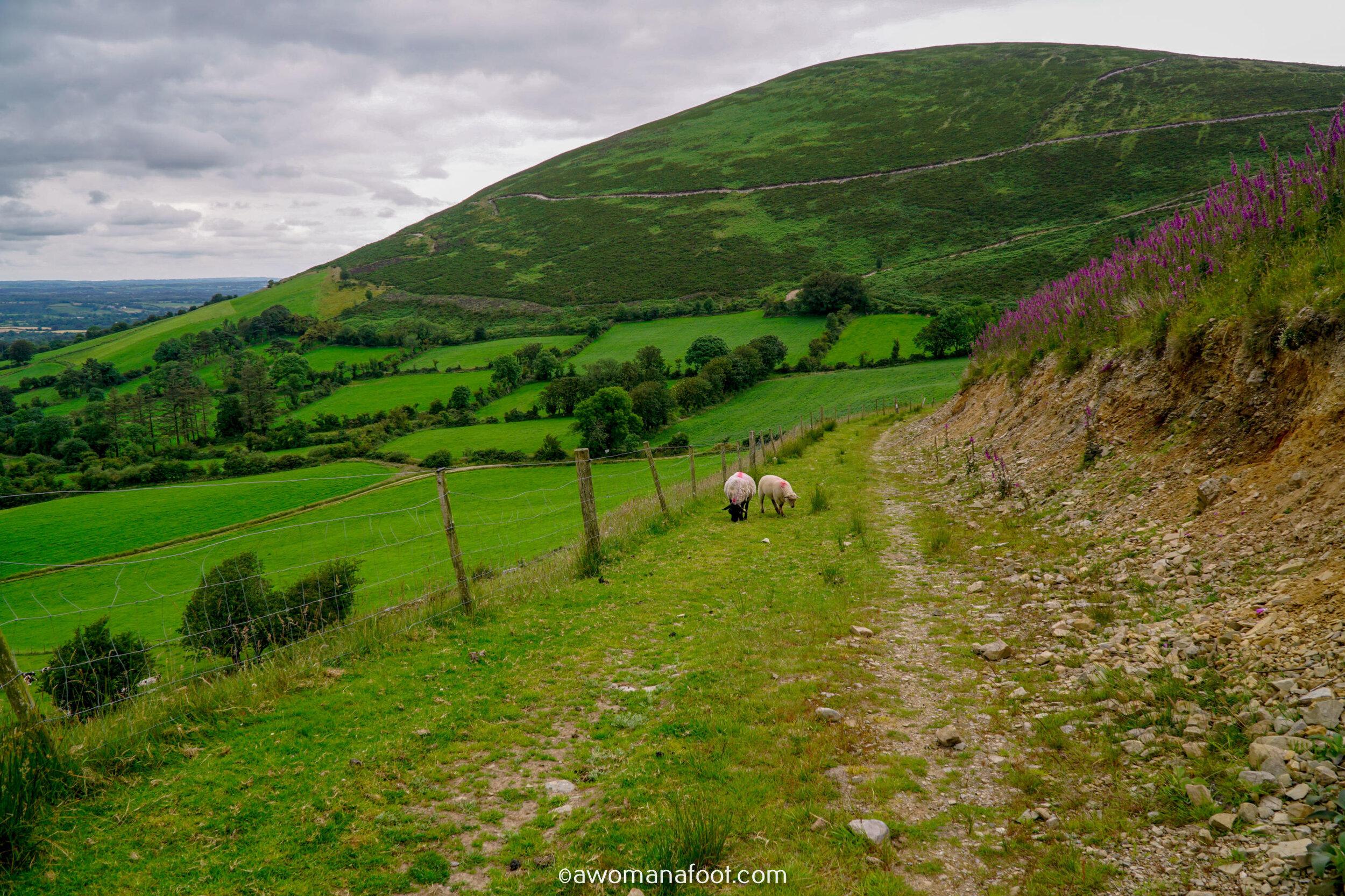 Hiking Solo Sli Gaeltacht Mhuscrai Mallow Ballyvourney133.jpg