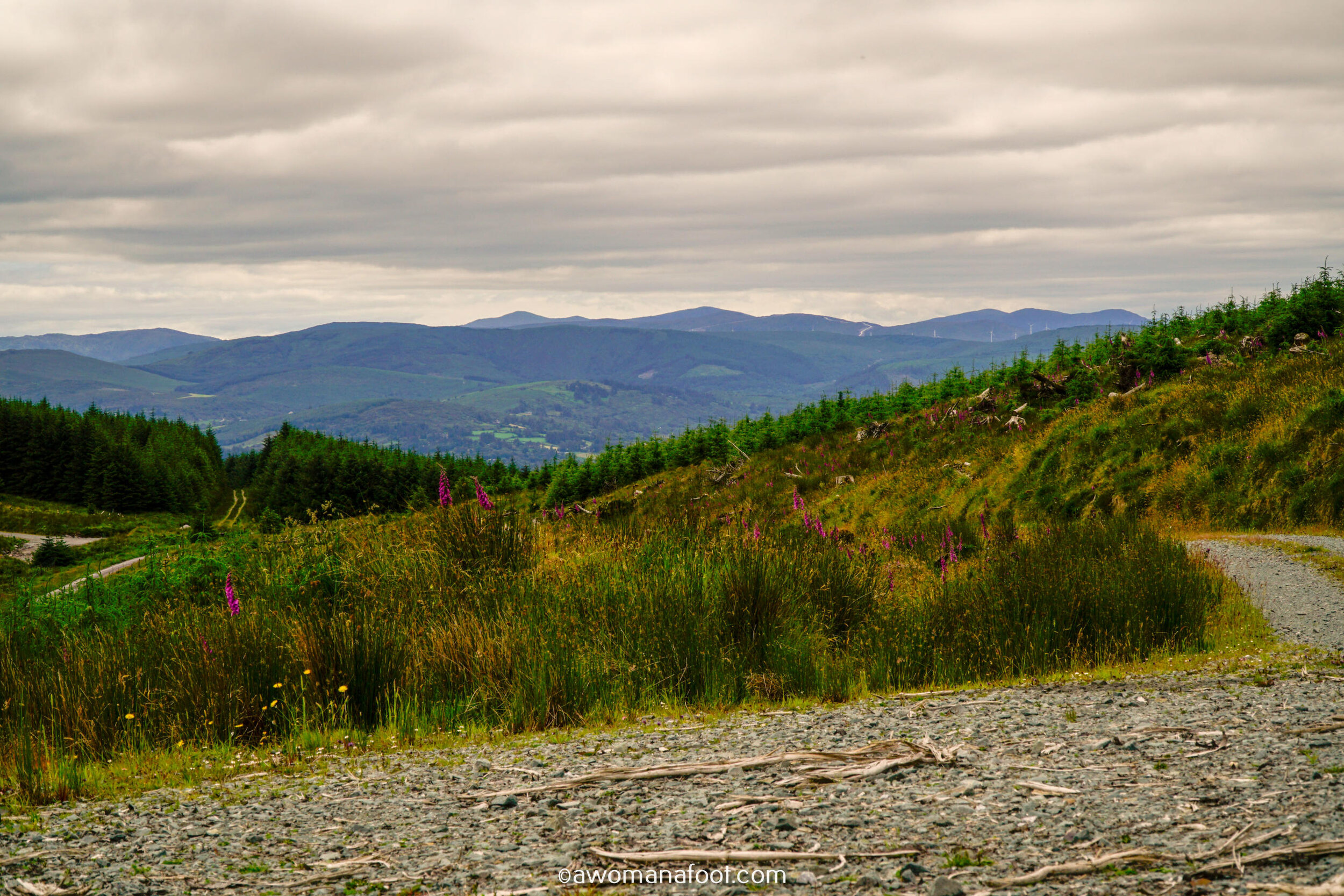 Hiking Solo Sli Gaeltacht Mhuscrai Mallow Ballyvourney279.jpg