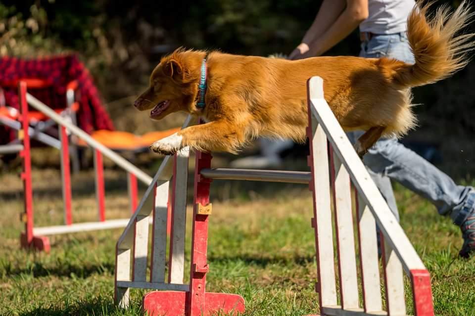 muzo-lyon-chien-agility-saut-b-miette.jpg