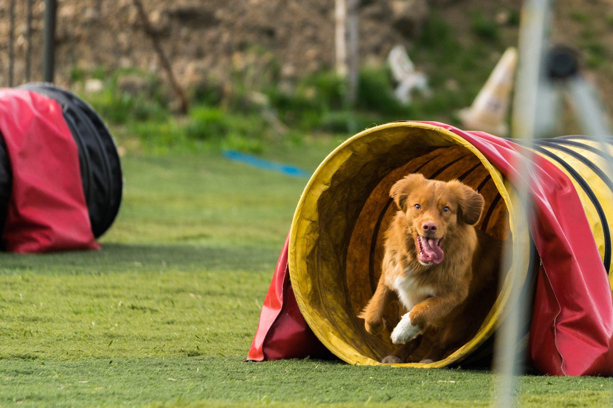Sports Canins - Renforcez le lien avec votre chien grâce à des sports canins