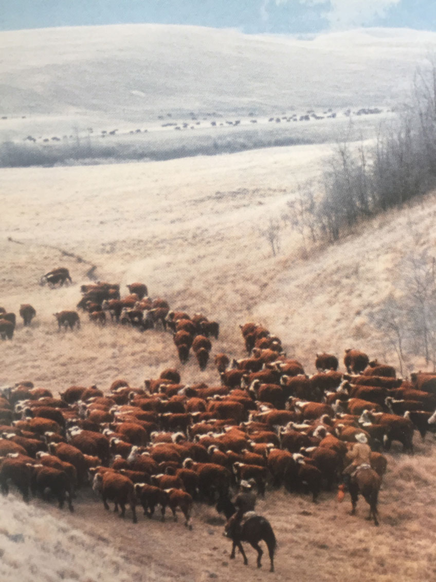 dlr-img-ranch-history-x-2.jpg