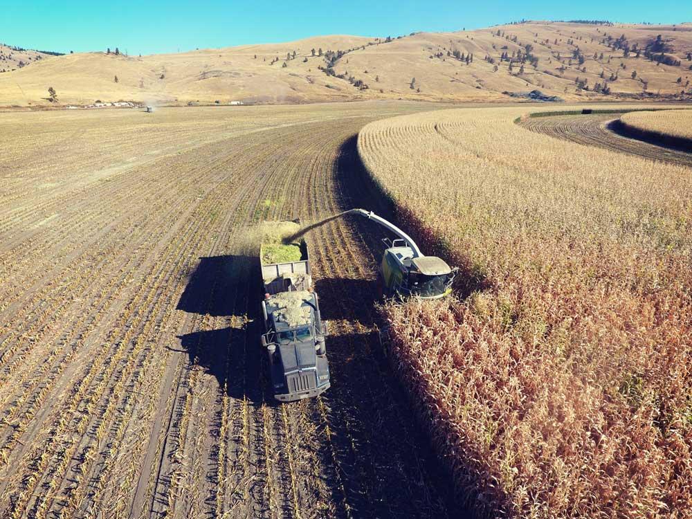 dlr-img-ranch-farm-1500x1500-2.jpg