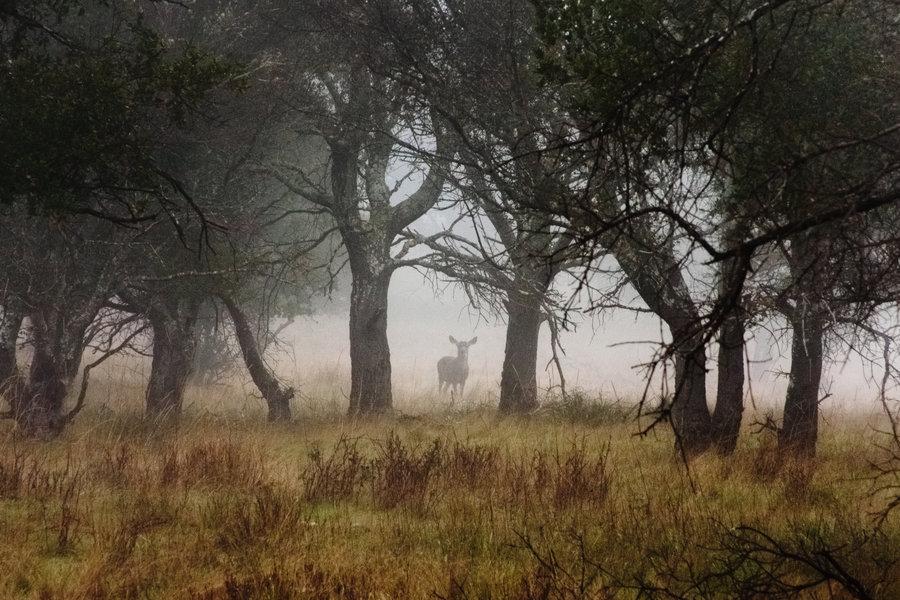 deer_in_forest_by_xelement.jpg