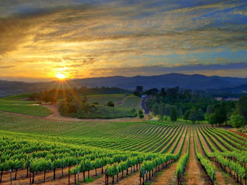 Grandviews from the Vineyard -