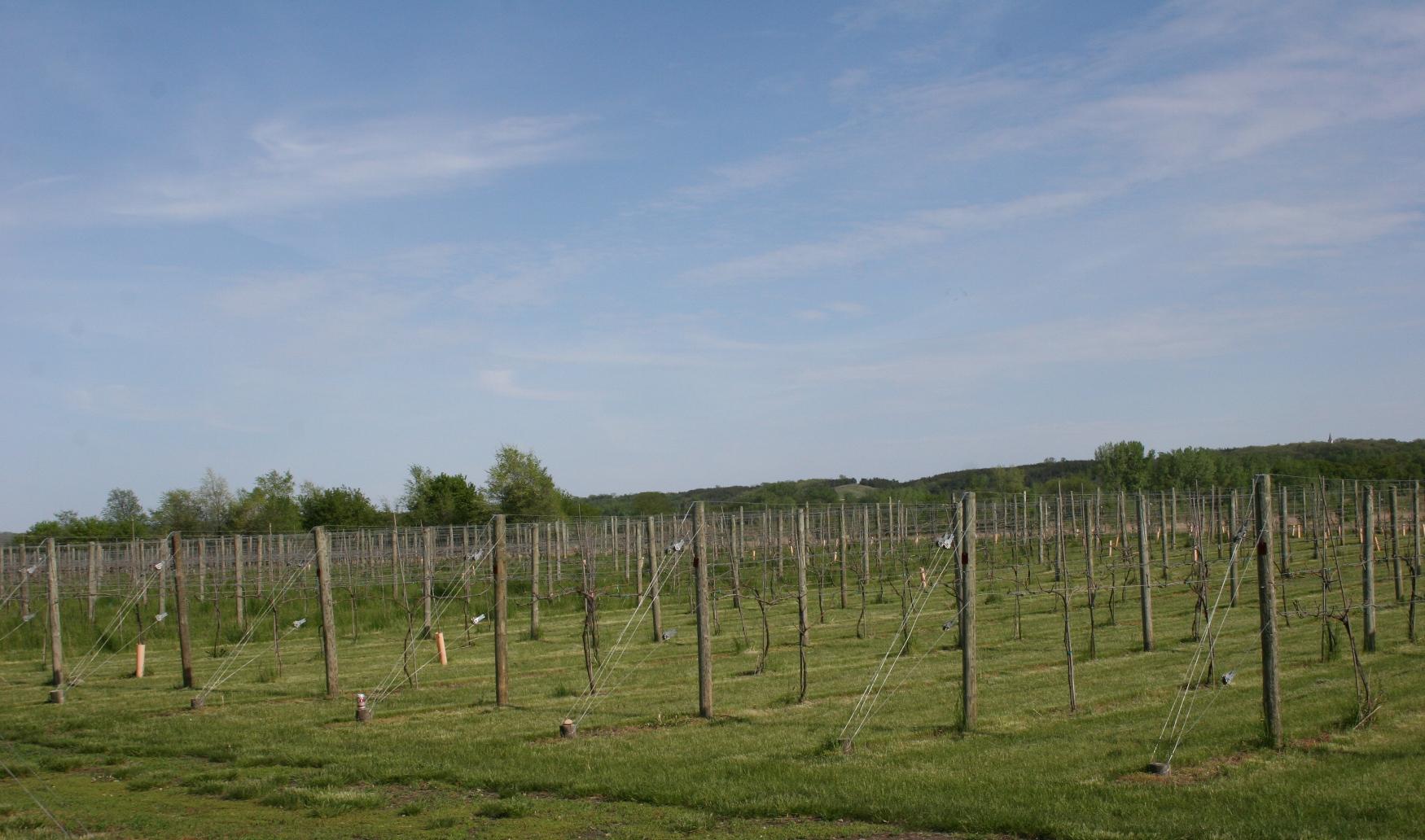 Grandview Valley Vineyard