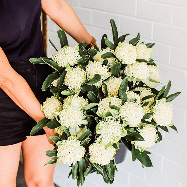 White Waratahs for Saturday! 😱 Yasssss plz! ❤️ But unfortunately, we're sold out. 😥 ⠀ ⠀