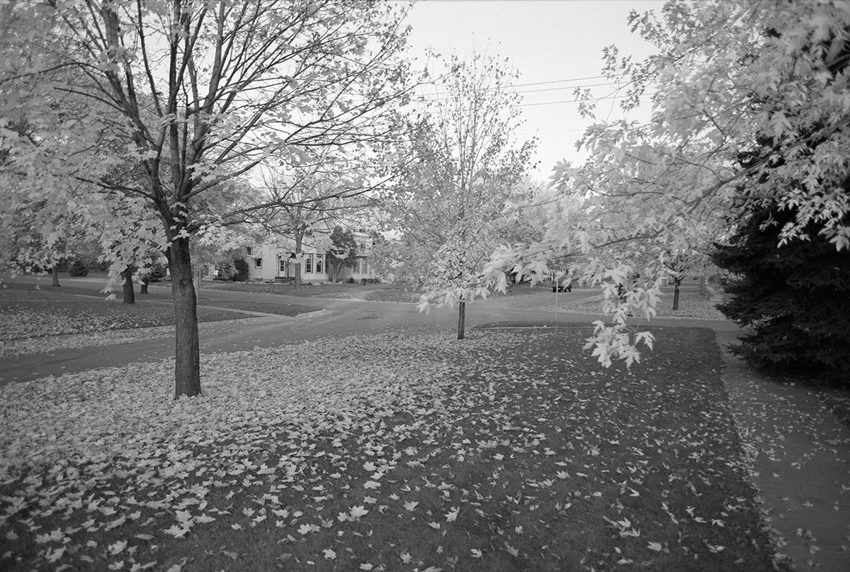 OTM_msp-leaves.jpg