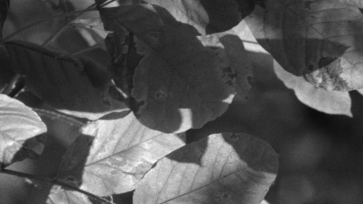 LeavesCU.jpg