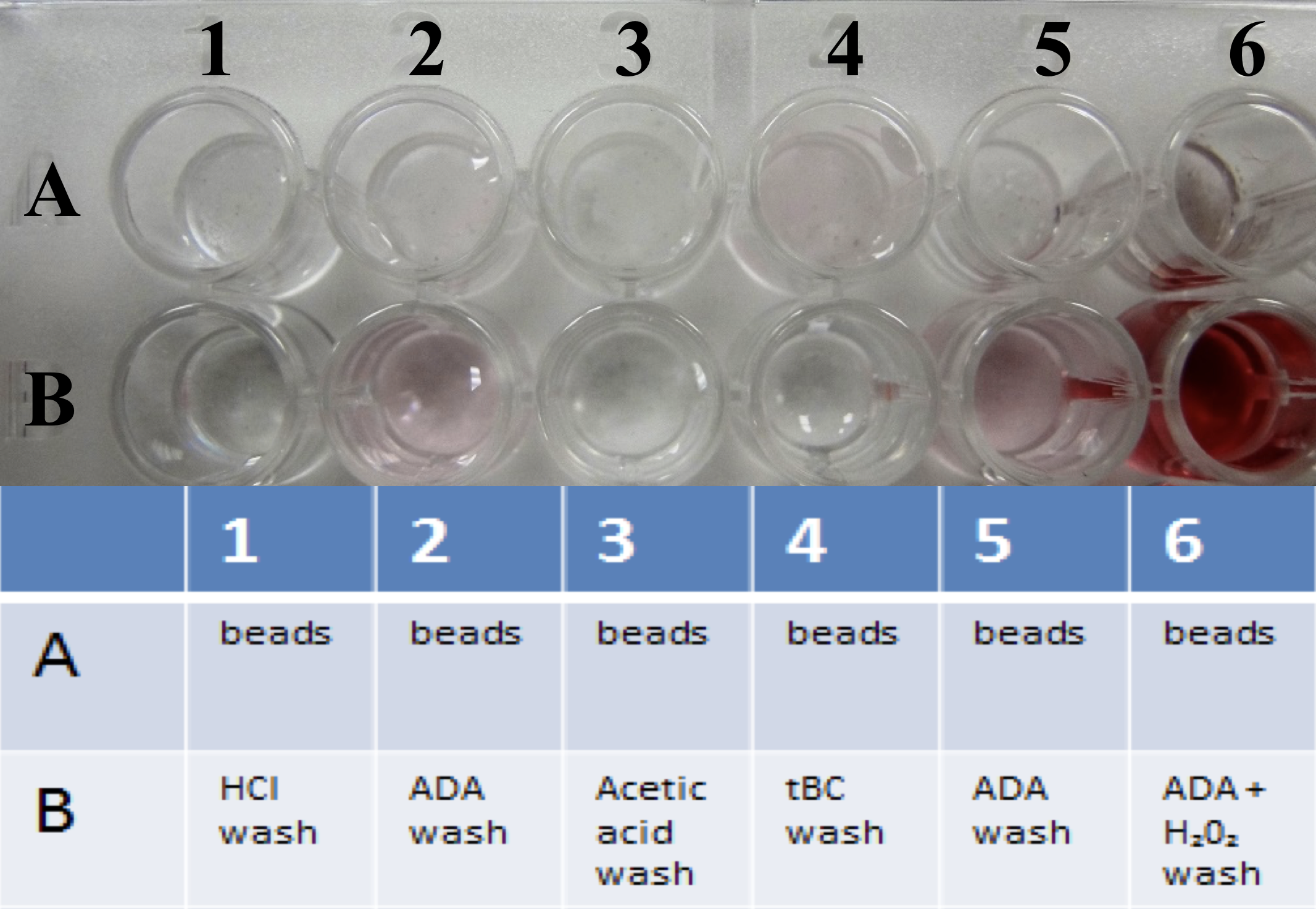 Figure 7. Microsphere assay. Table is a depiction of what was inserted into the wells. Row A is filled with the cemented microspheres. Each substrate solution, stated in the table, was injected in row A, than extracted and placed in row B. B2 and B5 showed laccase activity, and B6 showed peroxidase activity.