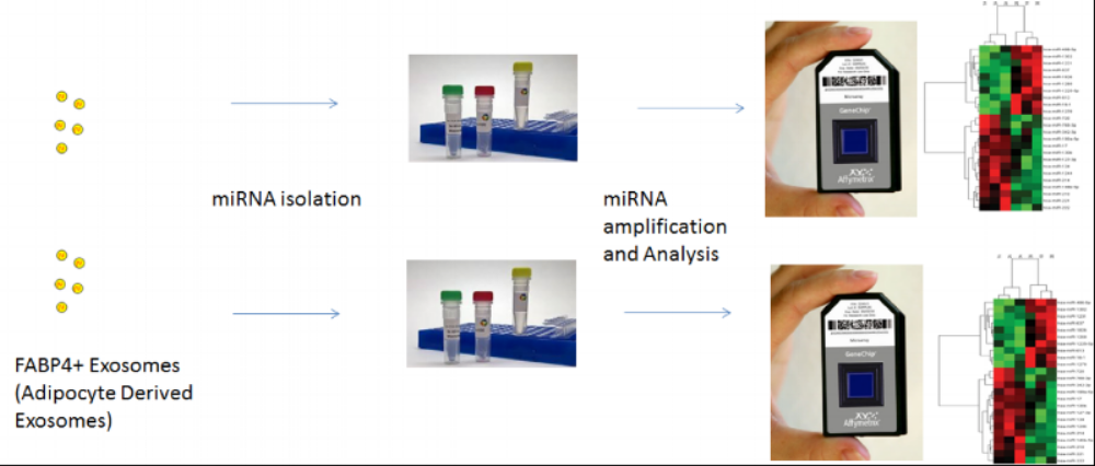 Figure 3 . Summary of Experimental Methods including FABP4+ selection and tagging, exosome/microRNA isolation, and miRNA amplification and microchip array analysis