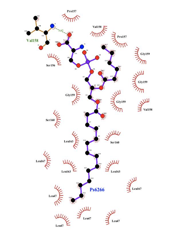 Figure 1.  LigPlot of AQP5 and SAHA.