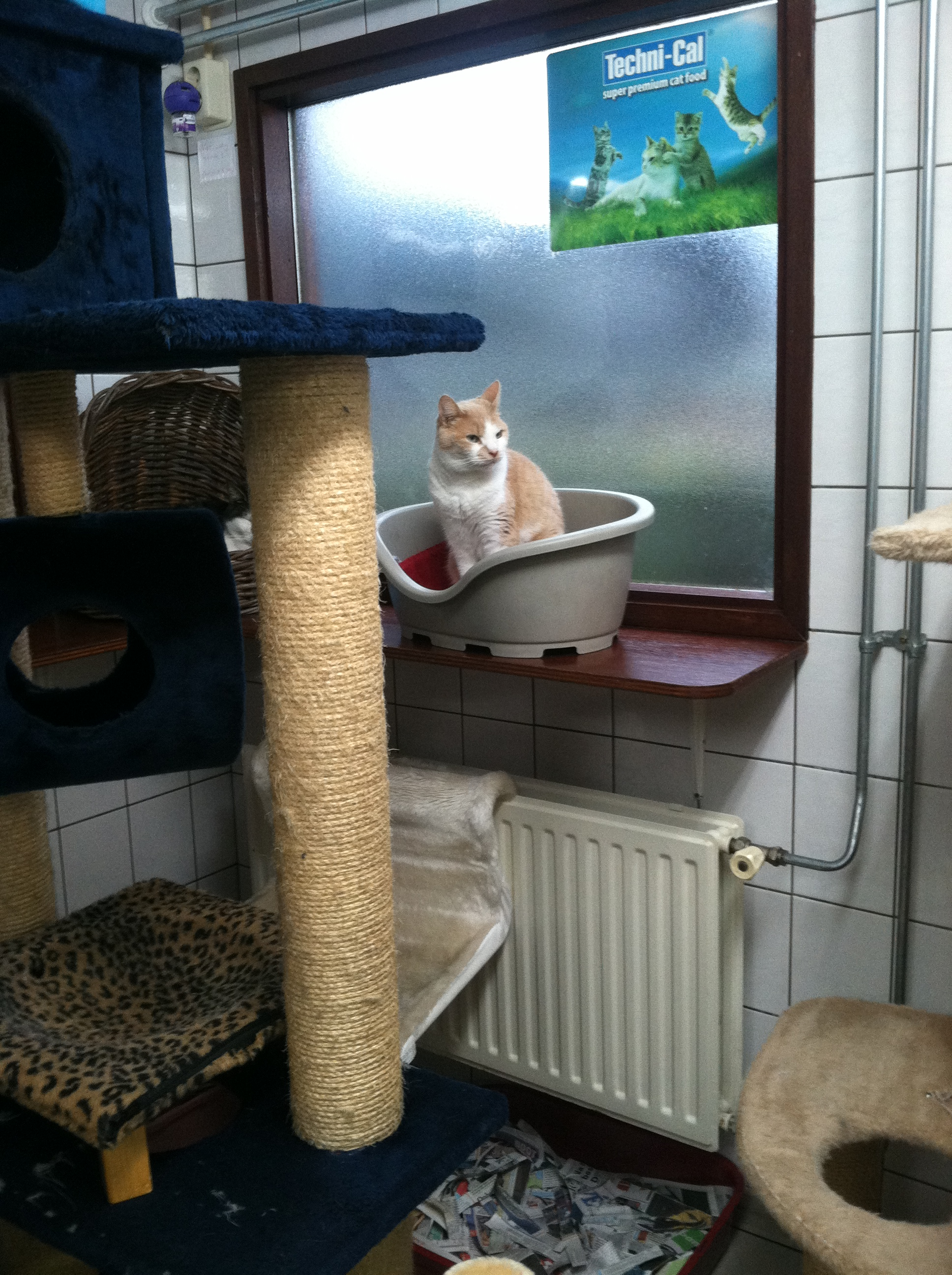 The little houseboat is stuffed with kitty beds and playthings.