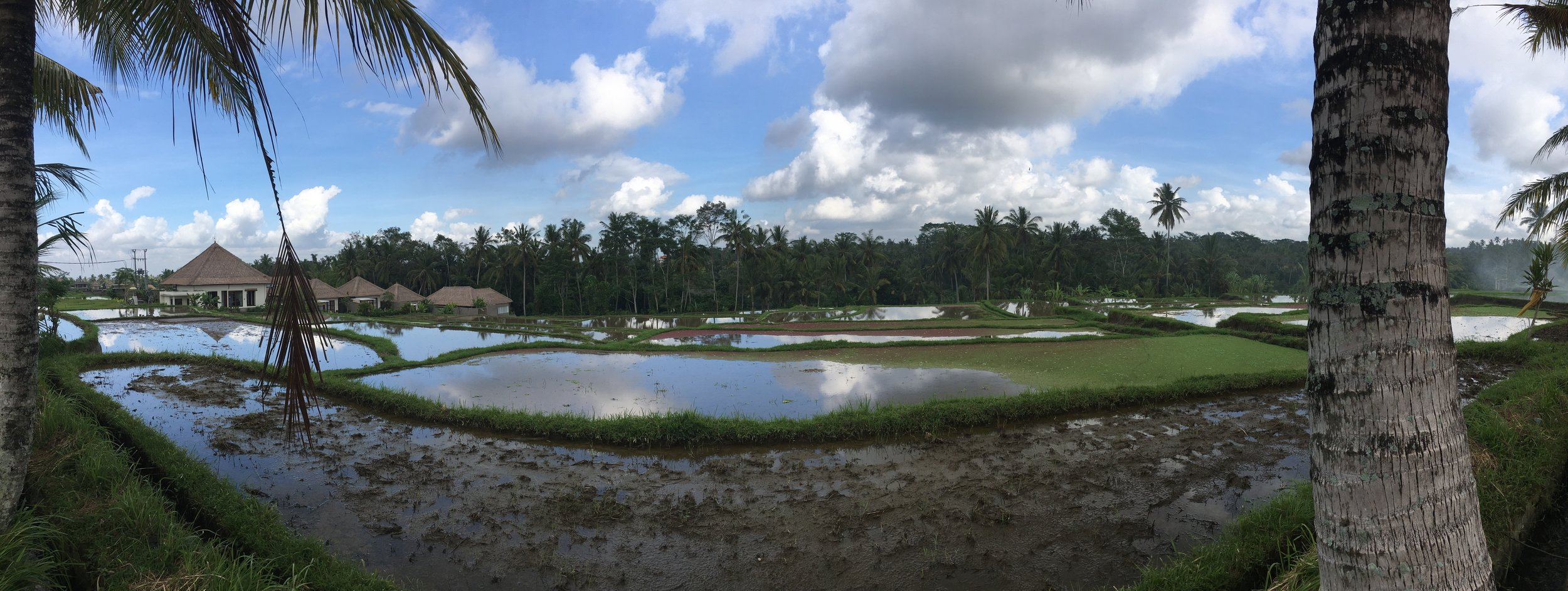 Panoramic of the rice fields we toured prior to our cooking class.