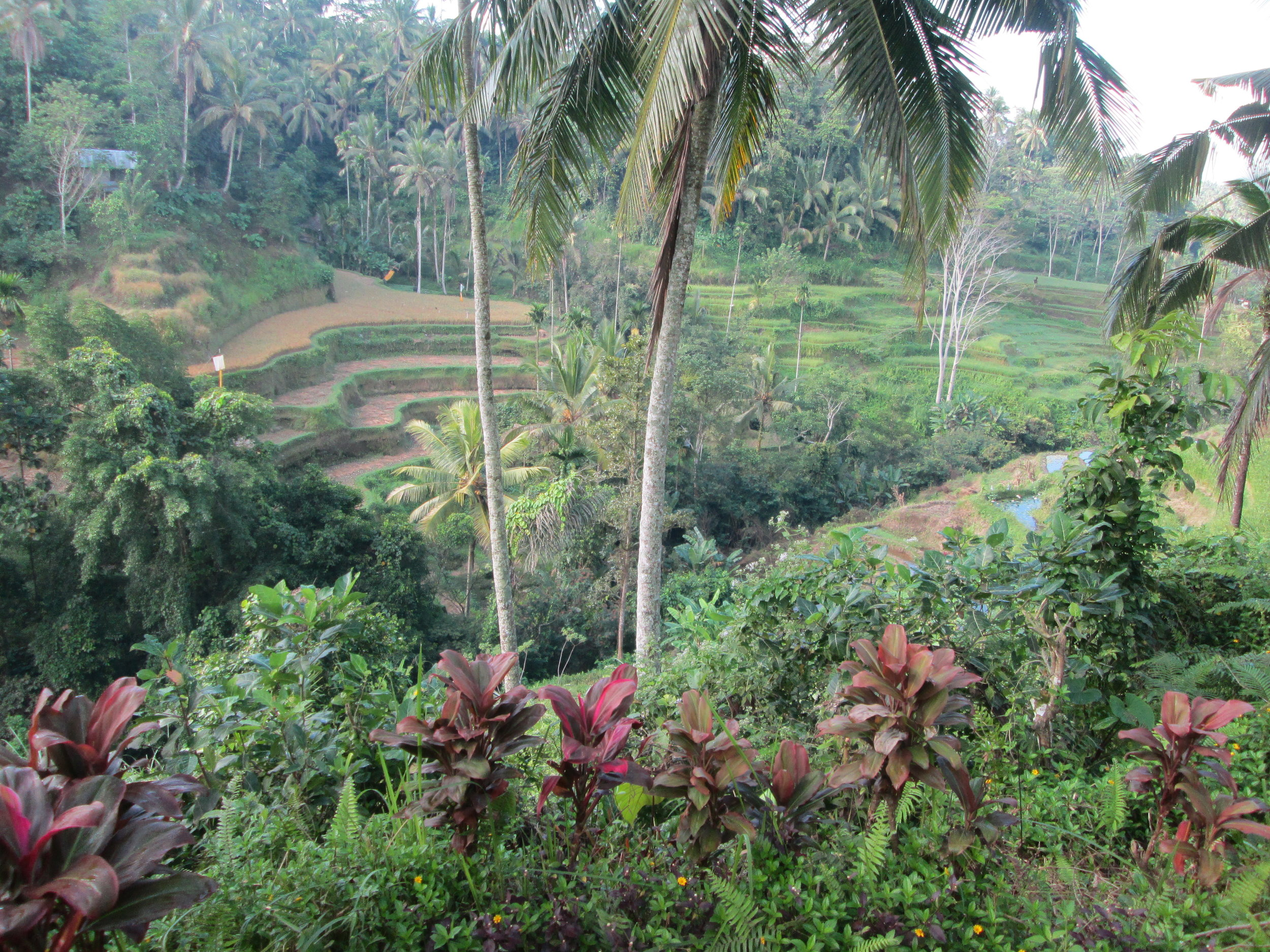 Tegalalang rice fields in Ubud.