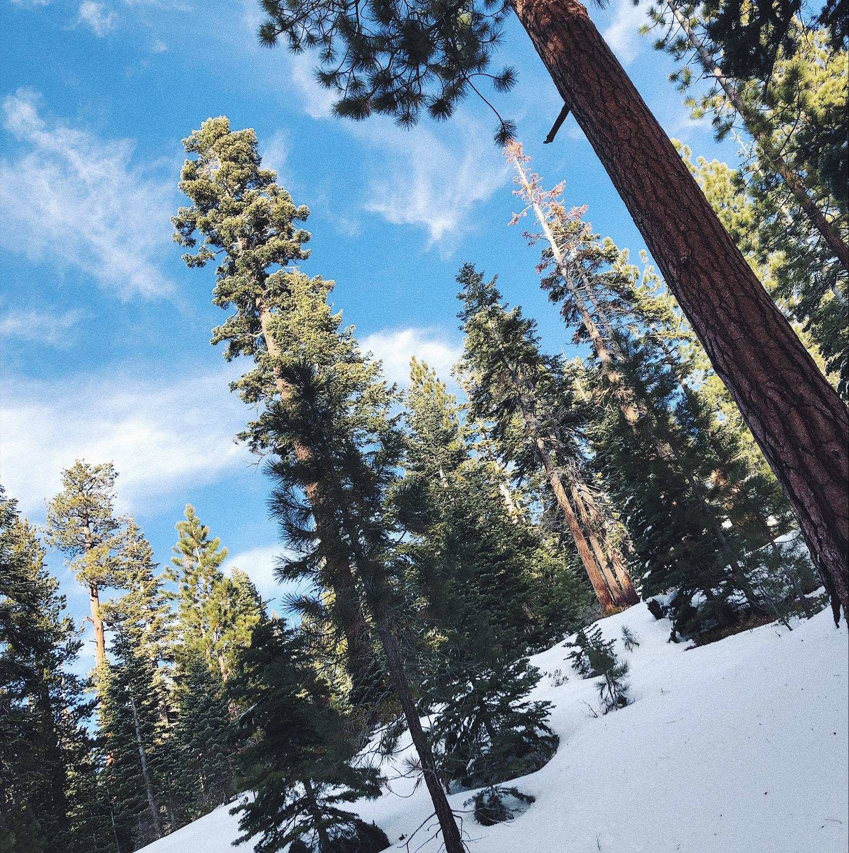 Snowshoeing the Tahoe Rim Trail in South Lake Tahoe.