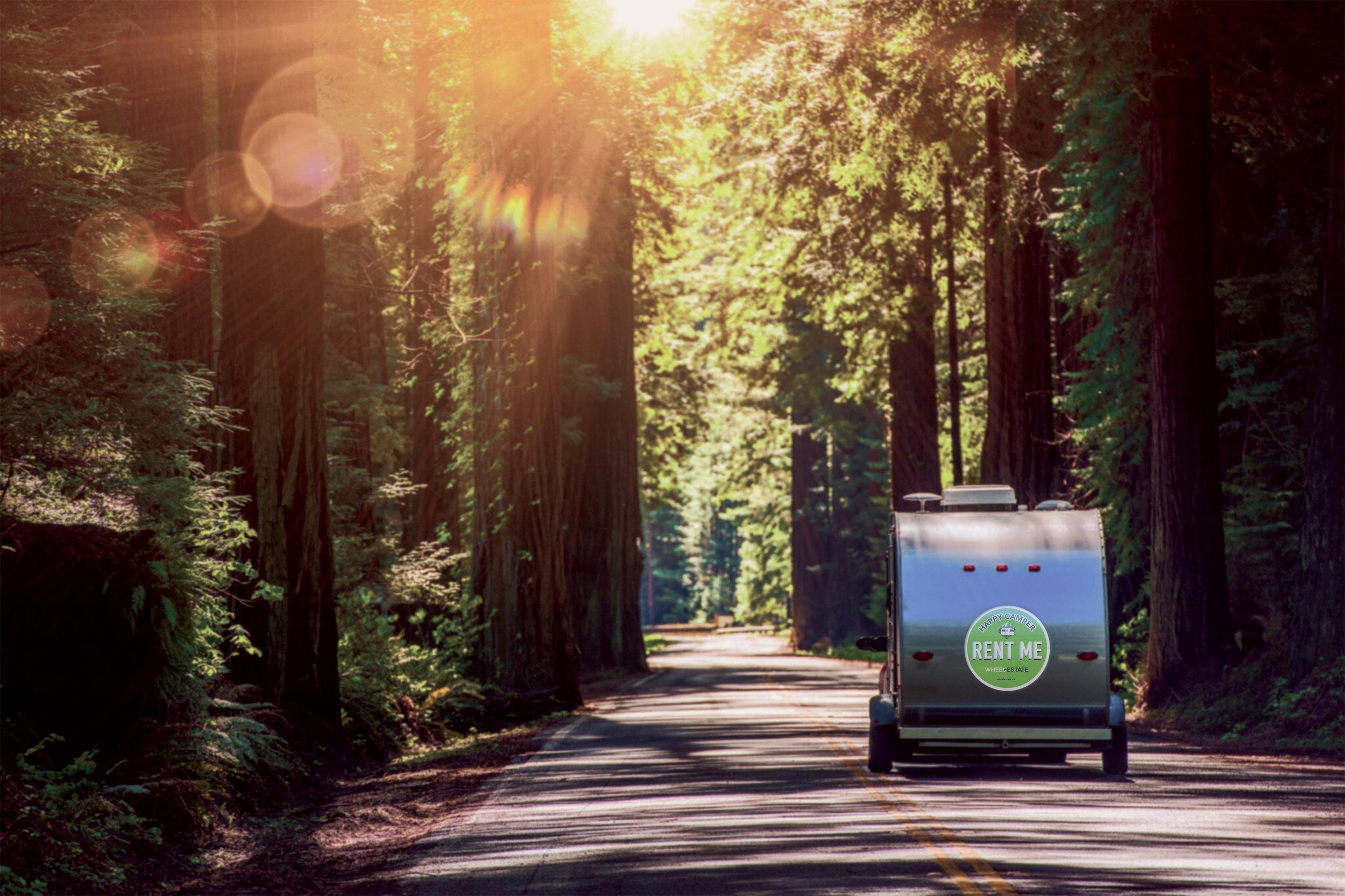 Camping-in-Redwoods-WE-sticker.jpg