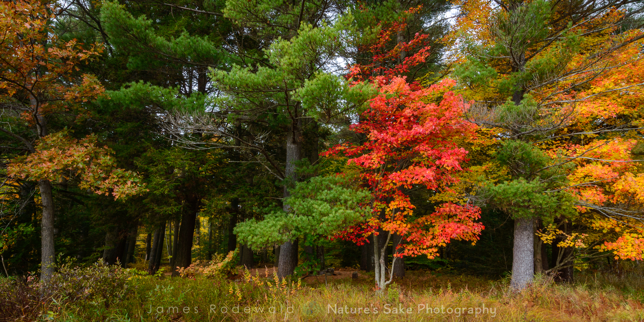 """Adirondack Fall"" to benefit Lake George Land Conservancy"