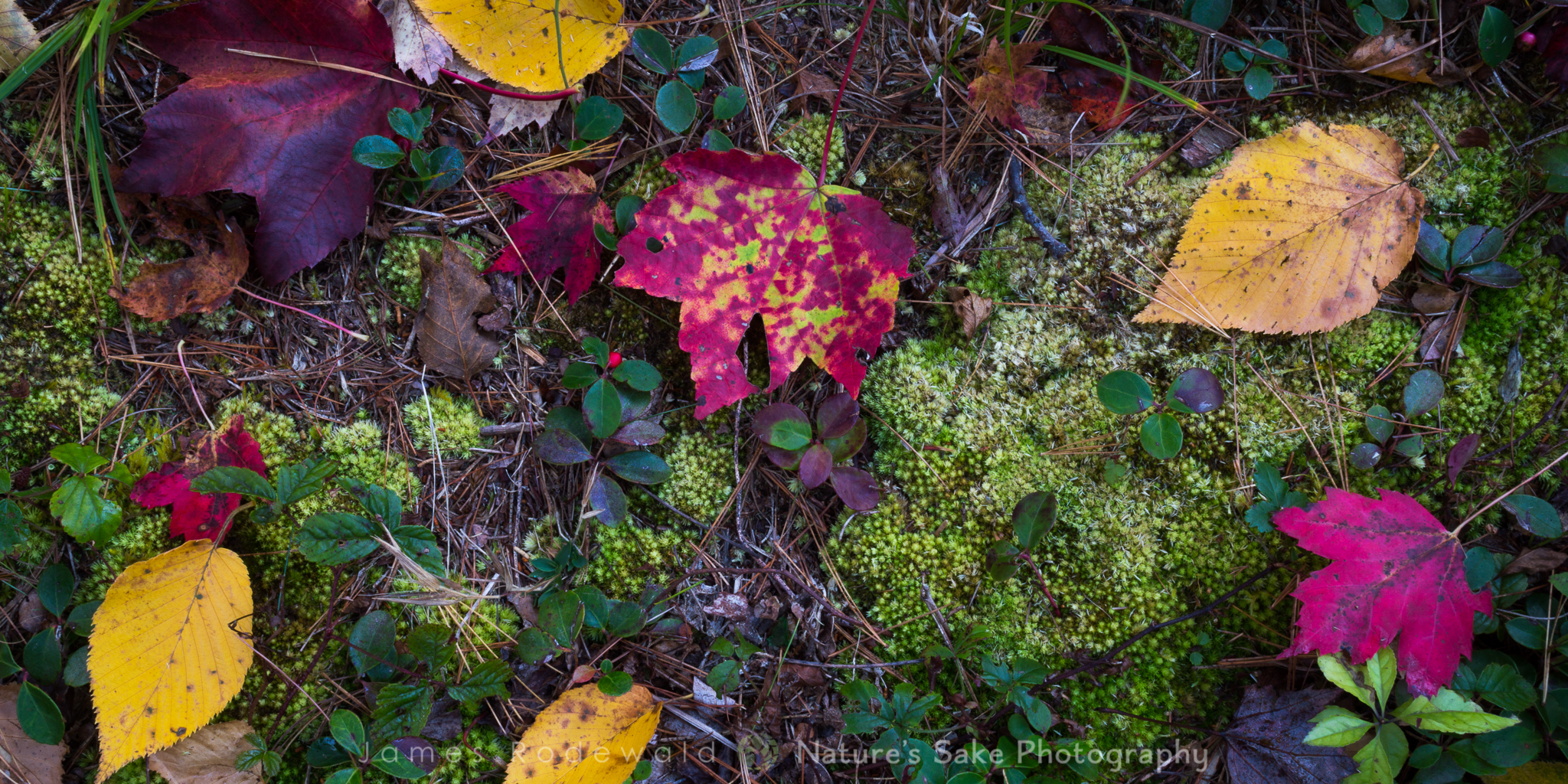 """""""Autumn and Wintergreen"""" to benefit Lake George Land Conservancy"""