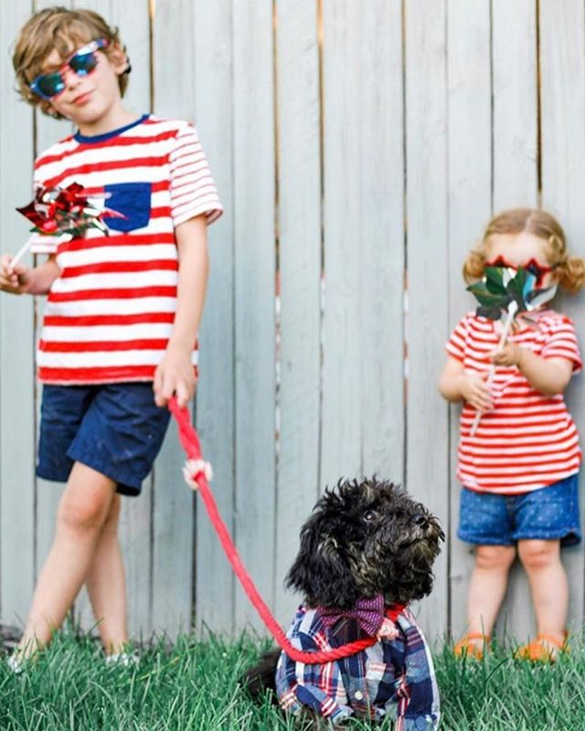 Happy 4th of July!🇺🇸 @good.day.charlie jumped on the occasion to match his siblings🐶💙 👉🏼Use code ✨ENJOY15✨ for 15% off your order!
