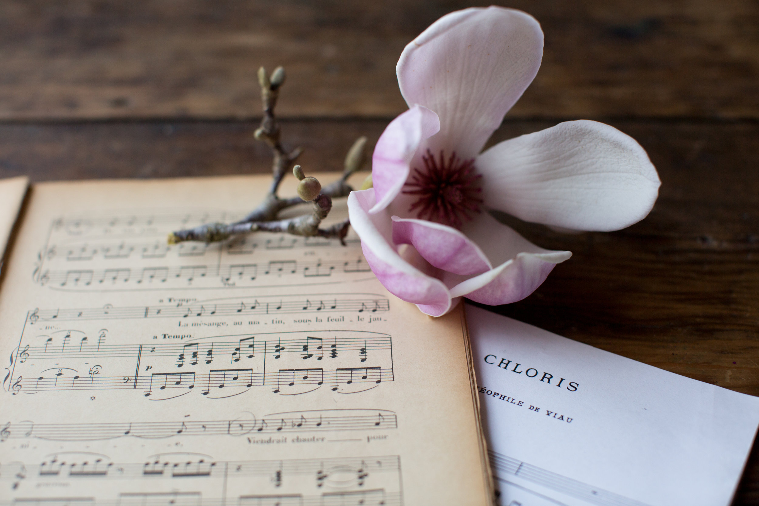 Paige_Green_magnolia.jpg