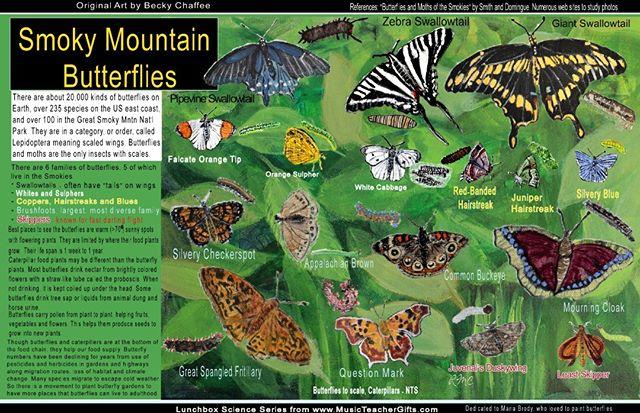 Smoky Mountain Butterfly Educational Place mat Shshshshsh. Butterflies aren't just to look pretty. They help us get fed!!!! #butterfly #gsmnp  #campdinner  #artbyBecky