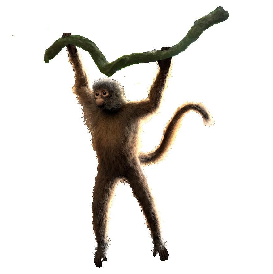 spiderMonkey_multiLayer_pose_v002.png