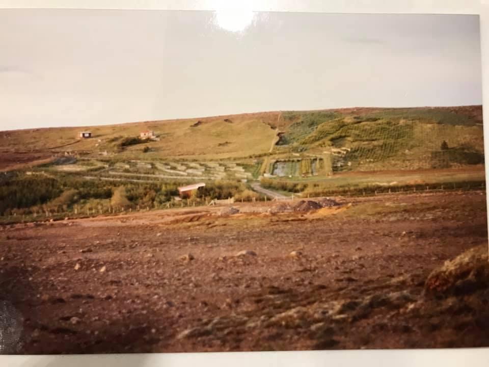 Guðmundar lundur 2.jpg