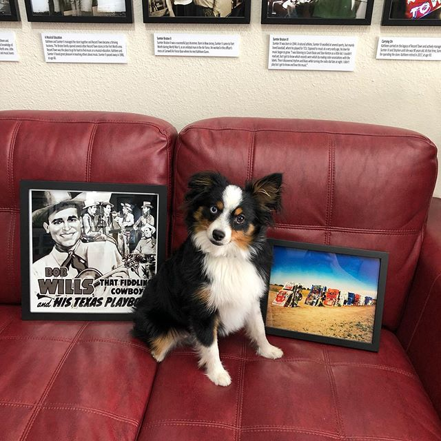 Ziggy loves the new pictures going up at Record Town. Come by and see for yourself! The walls are getting pretty full!