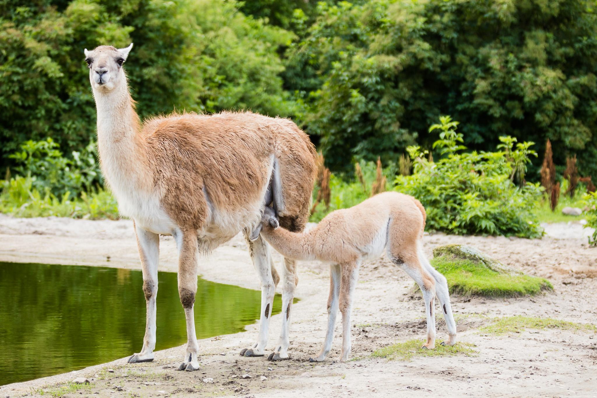 Givskud-Zoo-Safari-NorthernWorkshops-1.jpg